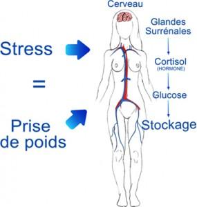 Le stress, prise de poids